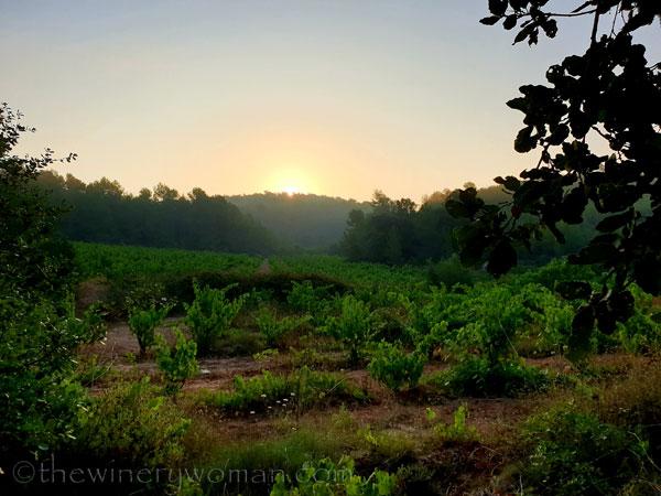 Sunrise_Vineyard19_8.8.19_TWW