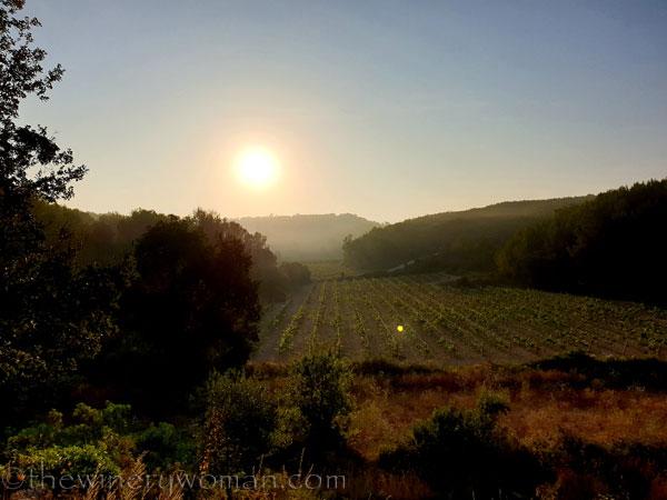 Sunrise_Vineyard20_8.8.19_TWW