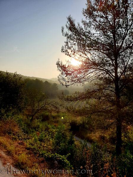 Sunrise_Vineyard21_8.8.19_TWW