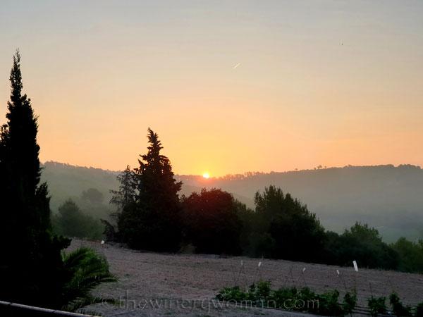 Sunrise_Vineyard2_8.8.19_TWW
