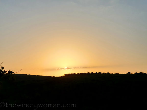 Sunrise_Vineyard3_8.5.19_TWW