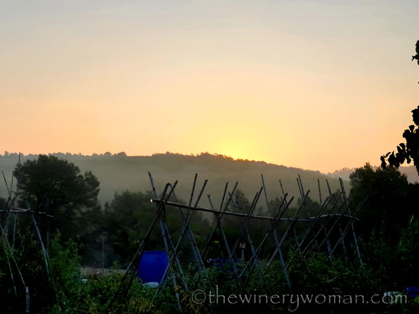 Sunrise_Vineyard4_8.8.19_TWW