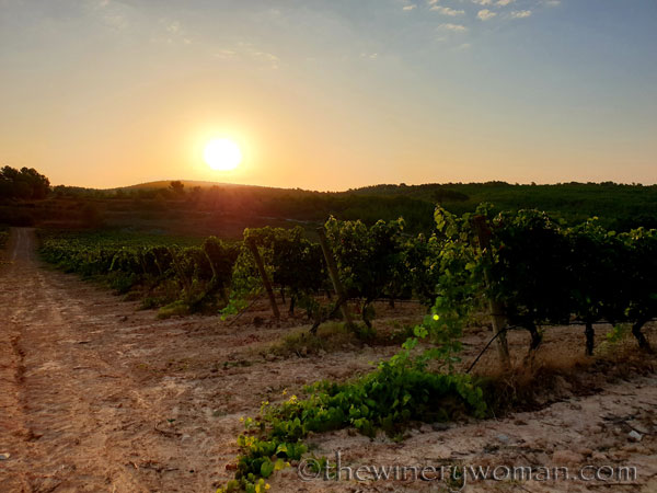 Sunrise_Vineyard6_8.5.19_TWW