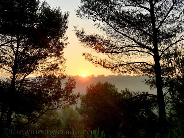 Sunrise_Vineyard6_8.8.19_TWW