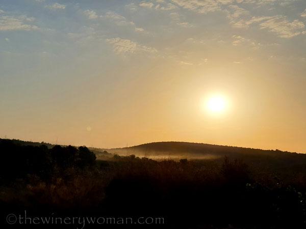 Sunrise_Vineyard7_8.5.19_TWW