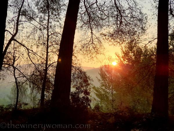Sunrise_Vineyard7_8.8.19_TWW