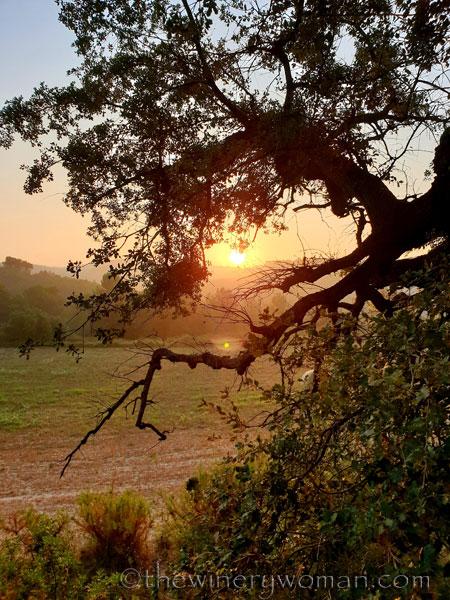 Sunrise_Vineyard9_8.8.19_TWW