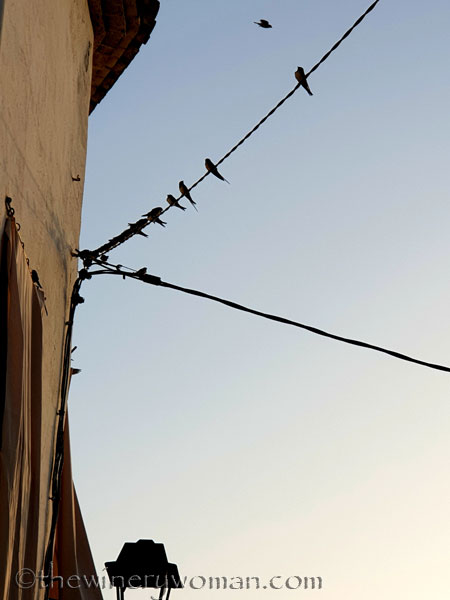 Swallows_on_wire2_8.1.19_TWW