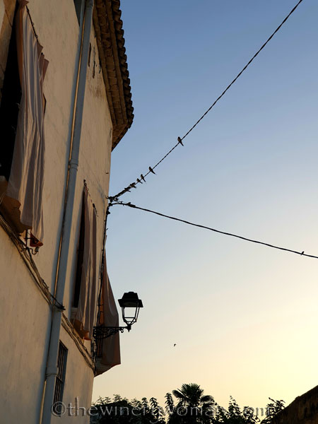 Swallows_on_wire_8.1.19_TWW