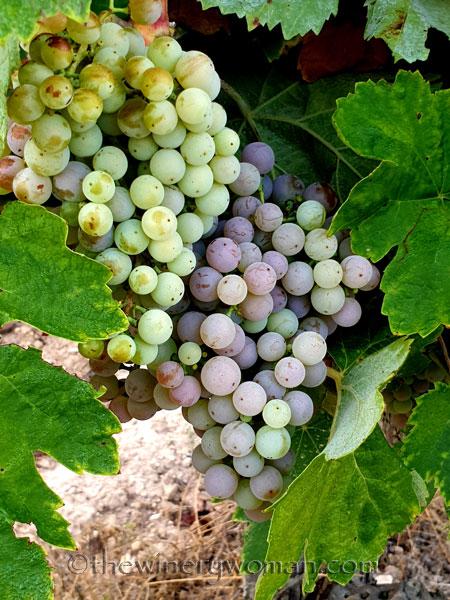 Vineyard3_8.15.19_TWW