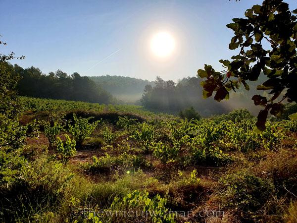 Vineyard4_8.17.19_TWW