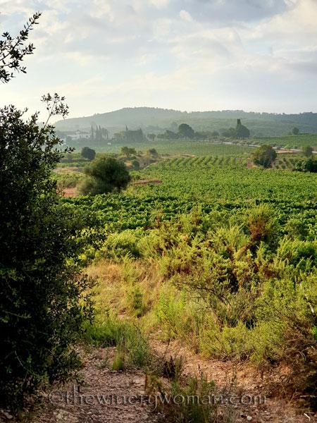 Vineyard6_8.15.19_TWW
