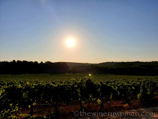 Vineyard_Sunrise_8.3.19_TWW
