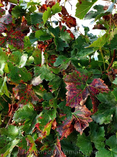 Autumn_Colors10_9.30.19_TWW