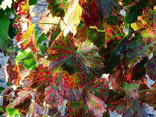 Autumn_Colors2_9.24.19_TWW