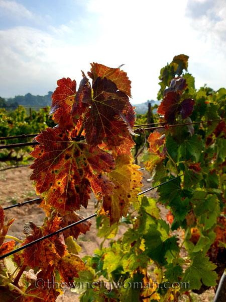 Autumn_Colors6_9.30.19_TWW