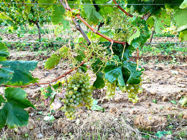 Harvest16_9.12.19_TWW