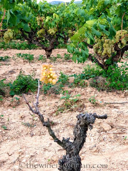 Vineyard2_9.6.19_TWW