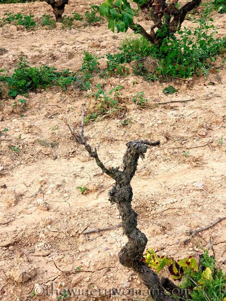Vineyard2_9.7.19_TWW