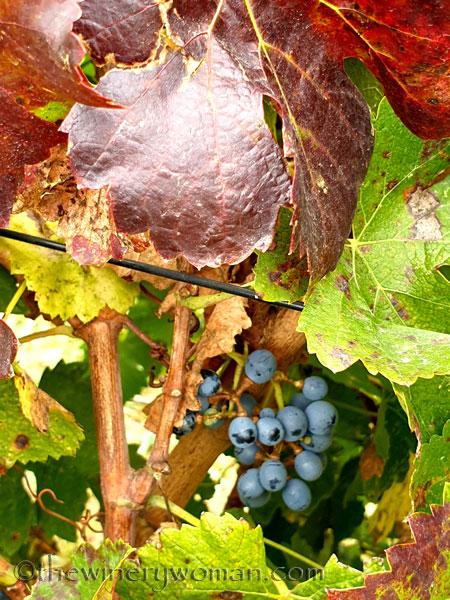 Autumn_Vineyard10_10.7.19_TWW