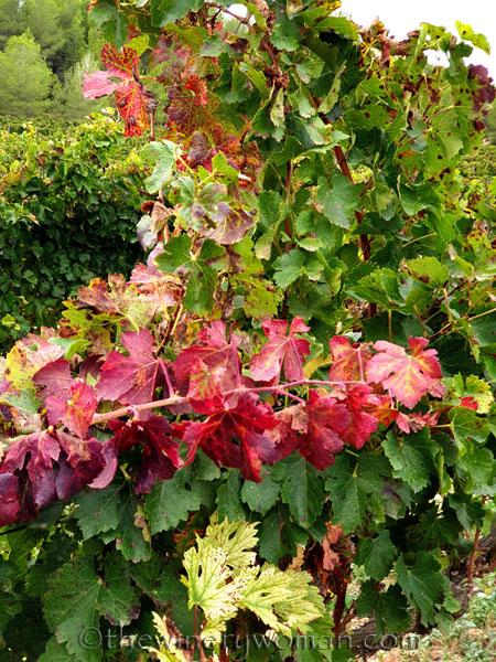 Autumn_Vineyard13_10.7.19_TWW