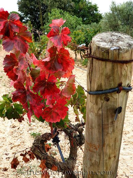 Autumn_Vineyard2_10.10.19_TWW