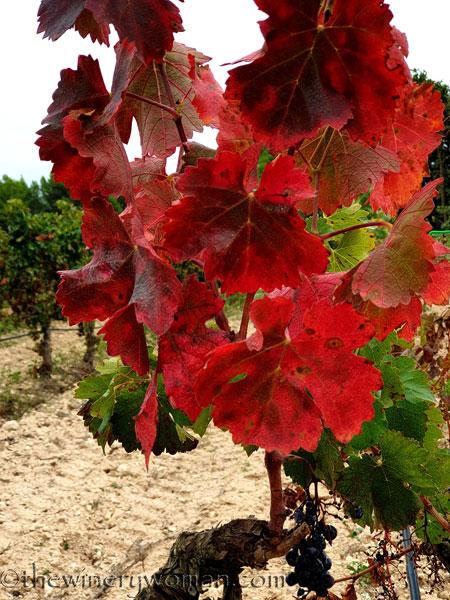Autumn_Vineyard3_10.10.19_TWW