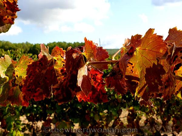 Autumn_Vineyard3_10.13.19_TWW