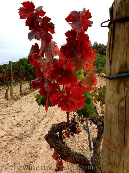 Autumn_Vineyard4_10.10.19_TWW