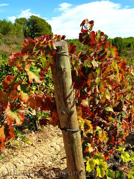 Autumn_Vineyard4_10.7.19_TWW