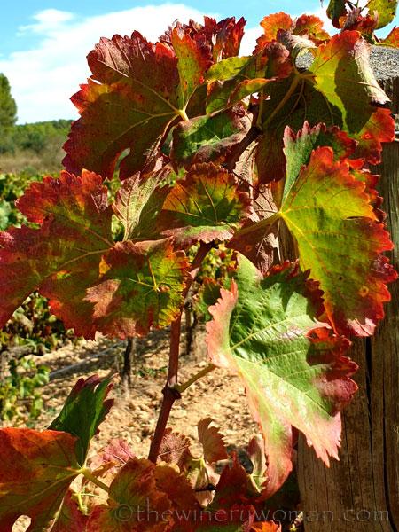 Autumn_Vineyard5_10.7.19_TWW