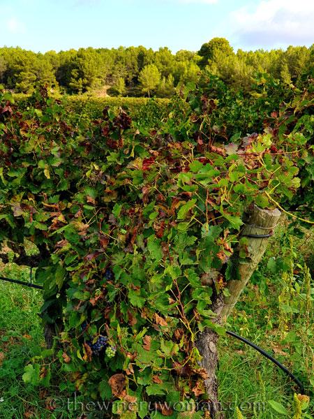 Autumn_Vineyard6_10.13.19_TWW