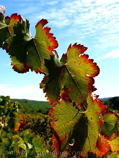 Autumn_Vineyard6_10.7.19_TWW