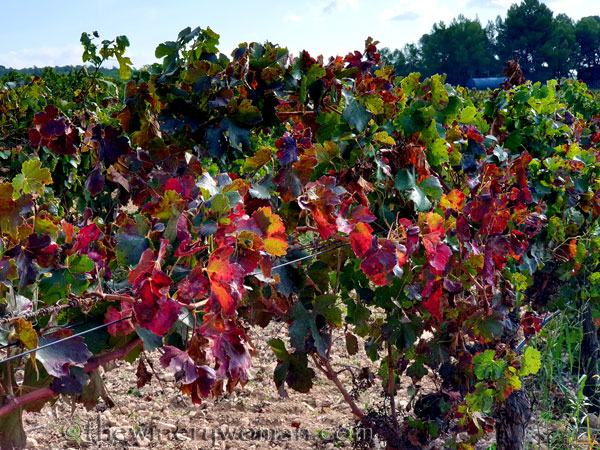 Autumn_Vineyard8_10.13.19_TWW