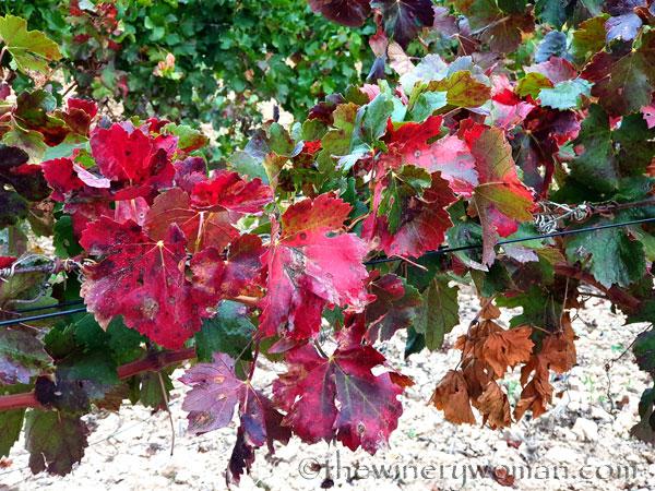 Autumn_Vineyard8_10.7.19_TWW