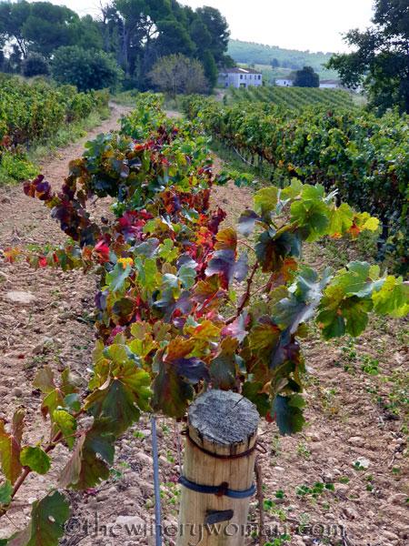 Autumn_Vineyard9_10.13.19_TWW