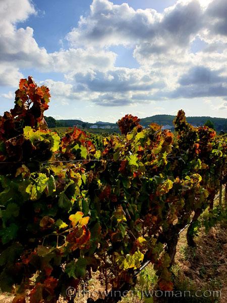 Autumn_Vineyard_10.13.19_TWW