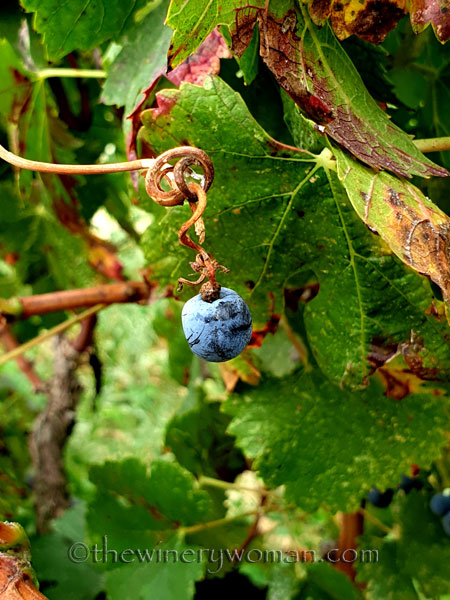 Unpicked_Grapes16_10.14.19_TWW