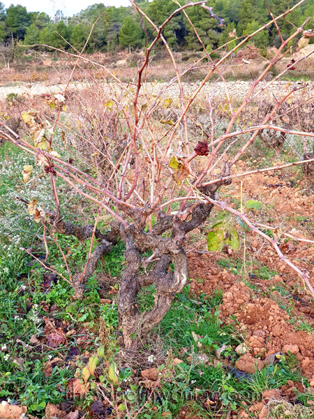 Autumn_Vineyard11_11.18.19_TWW