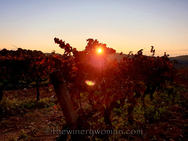 Autumn_Vineyard12_11.18.19_TWW