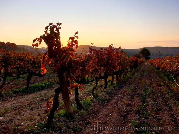 Autumn_Vineyard13_11.18.19_TWW