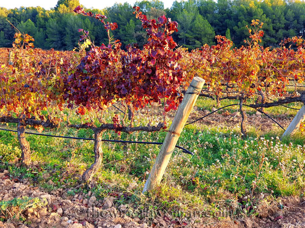 Autumn_Vineyard14_11.18.19_TWW