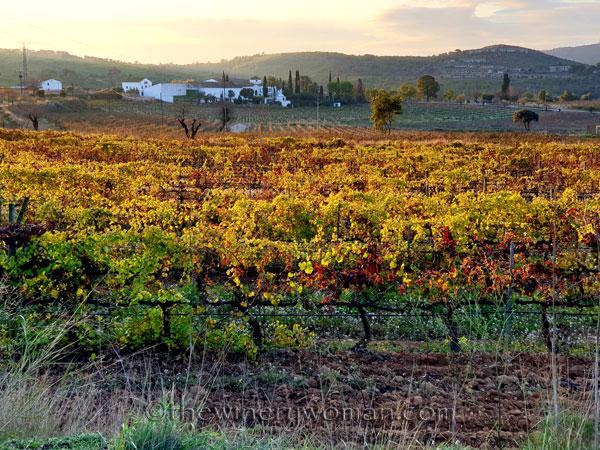 Autumn_Vineyard15_11.18.19_TWW