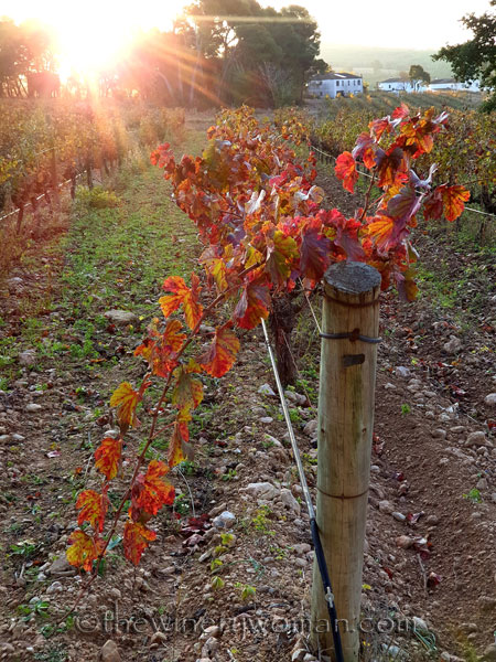 Autumn_Vineyard16_11.18.19_TWW