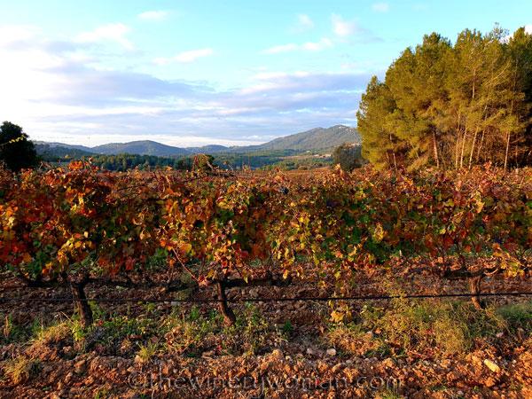 Autumn_Vineyard17_11.18.19_TWW