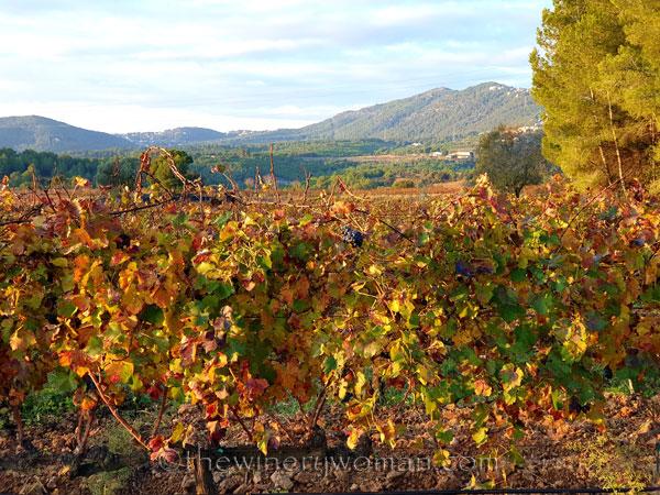 Autumn_Vineyard18_11.18.19_TWW