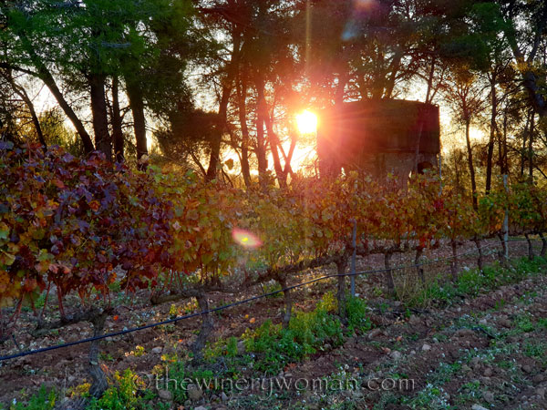 Autumn_Vineyard19_11.18.19_TWW