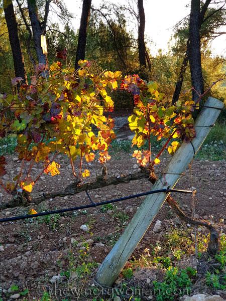 Autumn_Vineyard20_11.18.19_TWW
