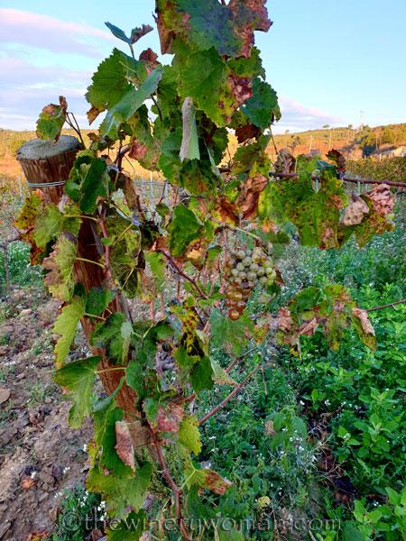 Autumn_Vineyard21_11.18.19_TWW