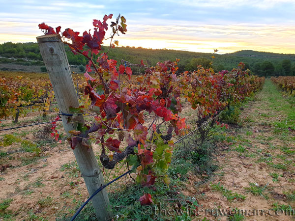 Autumn_Vineyard3_11.11.19_TWW